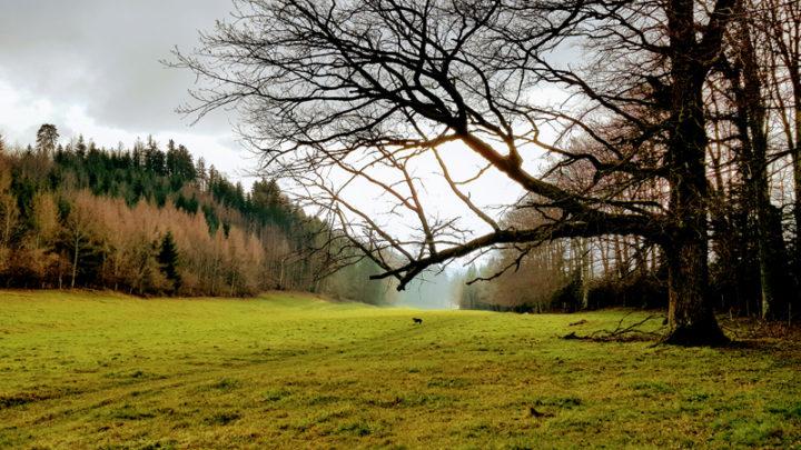 Le Mont Chesau