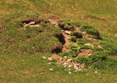 Marmotte - Terrier