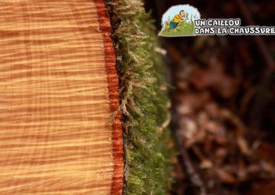 Galerie d'images - Coupe de bois