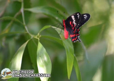 Galerie d'images - Papillons des iles