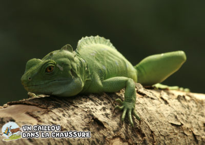 Galerie d'images - Reptile