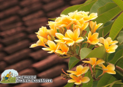 Galerie d'images - Bali
