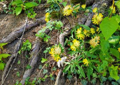 Randonnée – Sentier des Narcisses