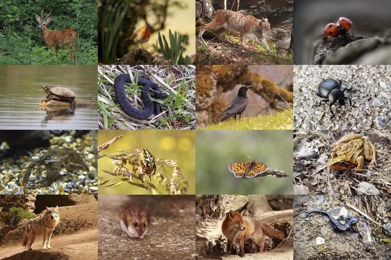 Nature - Animal