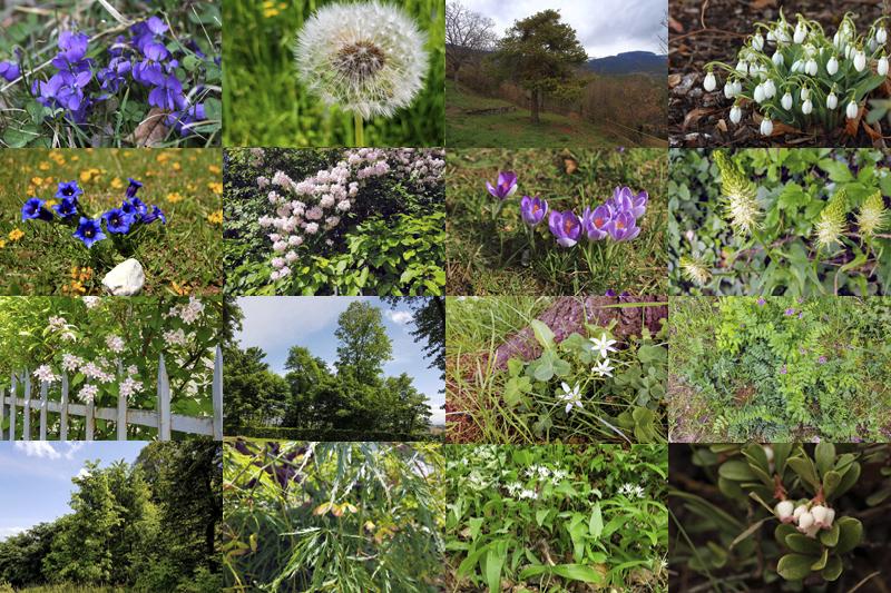 Nature - Végétal