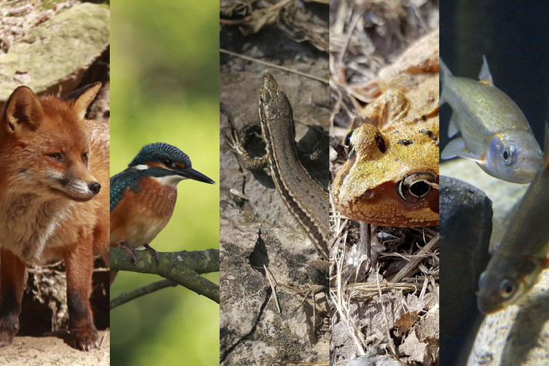 Nature - Animal - Vertébré