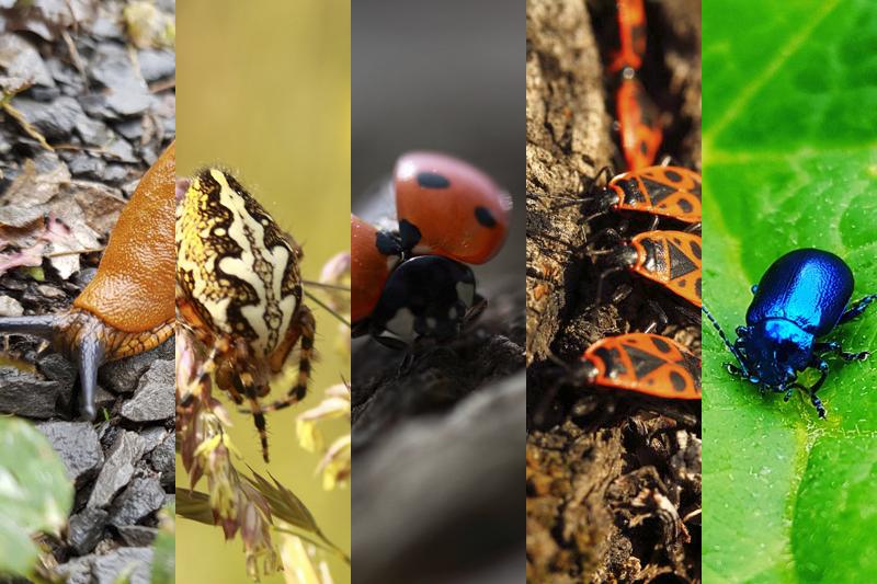 Nature - Animal - Invertébré