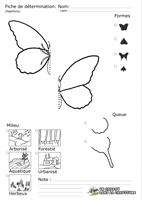 Papillons - Fiche de détermination