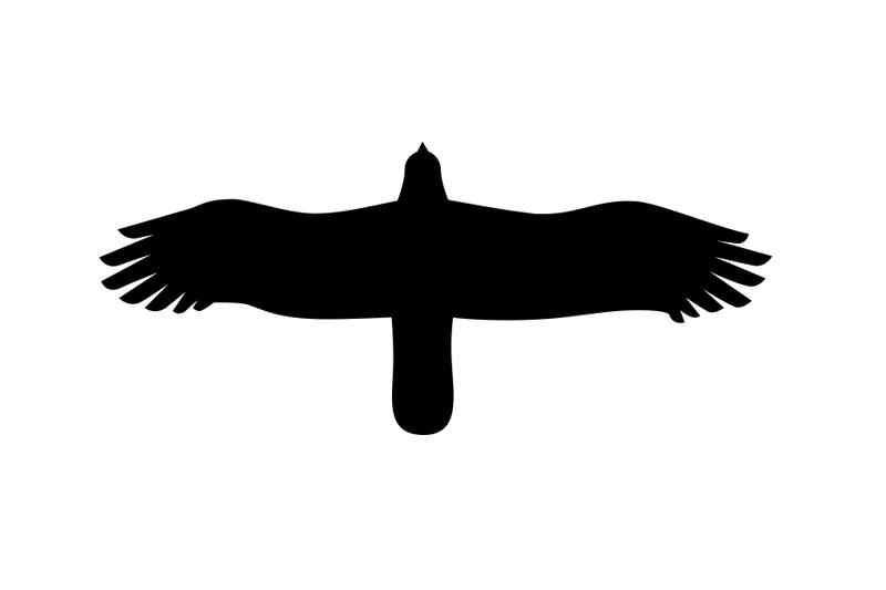 Rapace - Diurne - Aigle Royal - Dessin