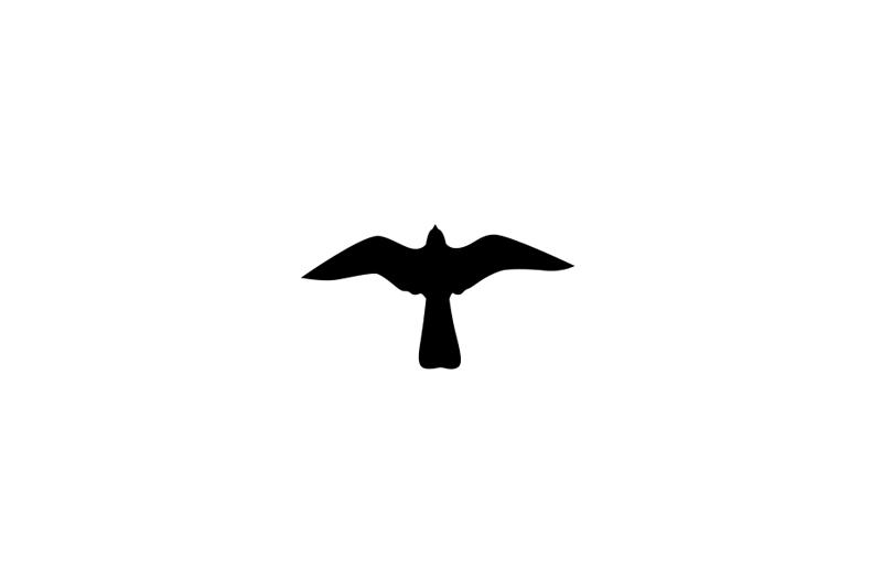 Rapace - Diurne - Faucon Crécerelle - Dessin