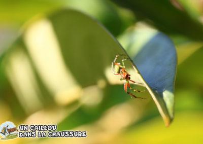 Galerie d'images – Arachnide