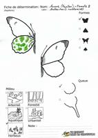 Aurore (Papillon) - Femelle - Fiche de détermination