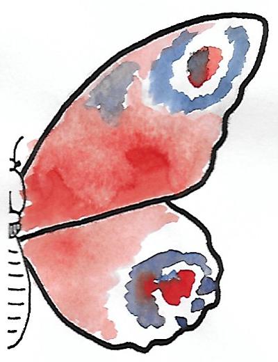 Détermination - Lépidoptère - Fig. 007