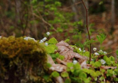 Randonnée - La Vounetse - Flores