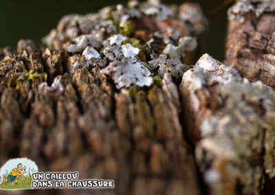 Galerie d'images – Lichen