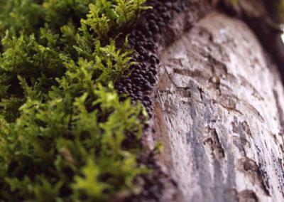 Galerie d'images – Bois et mousse